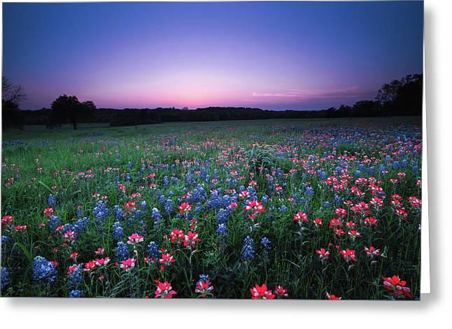 A Spring Night's Wildflower Dream - Texas Greeting Card by Ellie Teramoto