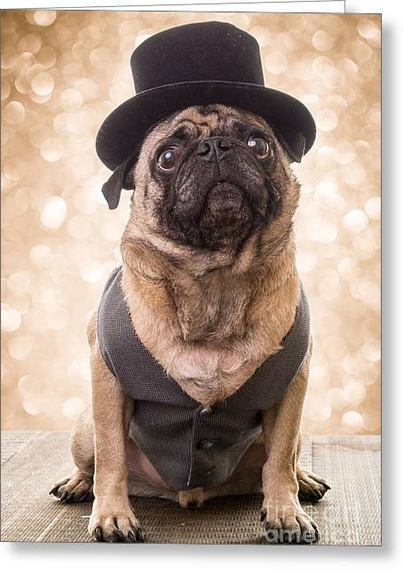Humor Greeting Cards - A Star Is Born - Dog Groom Greeting Card by Edward Fielding