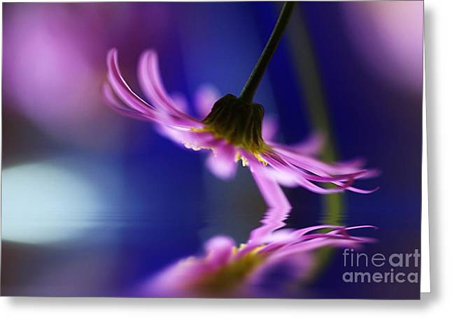 Pinks And Purple Petals Greeting Cards - A Stems Debut Greeting Card by Kym Clarke