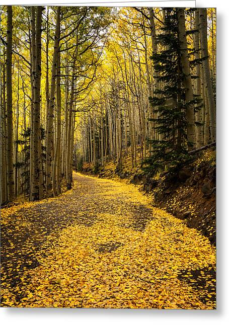 Fall Colors Greeting Cards - A Stroll Among the Golden Aspens  Greeting Card by Saija  Lehtonen