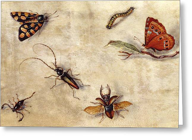 A Study Of Various Insects, Fruit And Animals Greeting Card by Jan Van Kessel the Elder