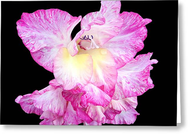 A Succulent Gladiola Greeting Card by Martin Wall