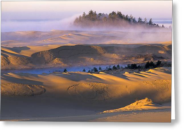 Oregon Dunes National Recreation Area Greeting Cards - A Sunny Morning Greeting Card by Robert Potts