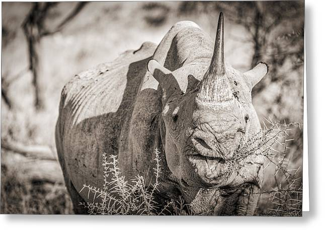 Rhinoceros Greeting Cards - A Tasty Thornbush Greeting Card by Duane Miller