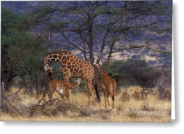 International Travel Greeting Cards - A Tender Moment Greeting Card by Sandra Bronstein