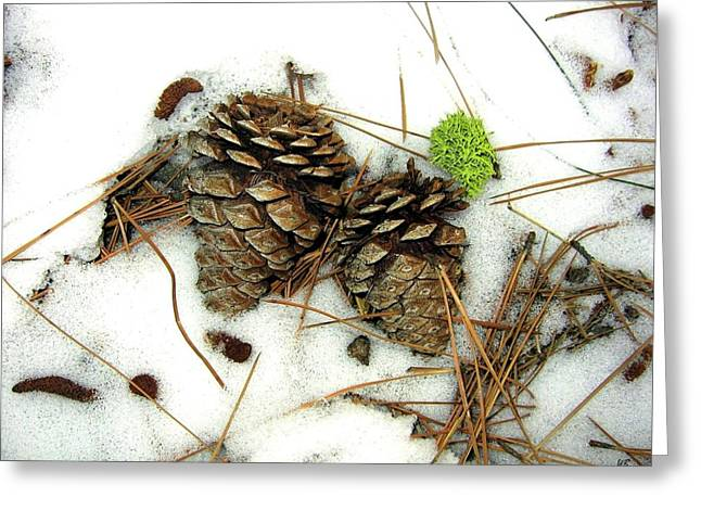 Pine Needles Greeting Cards - A Touch Of Moss Greeting Card by Will Borden