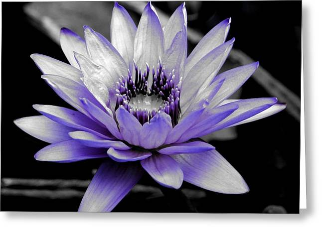 A Touch Of Purple Greeting Card by Carol Groenen