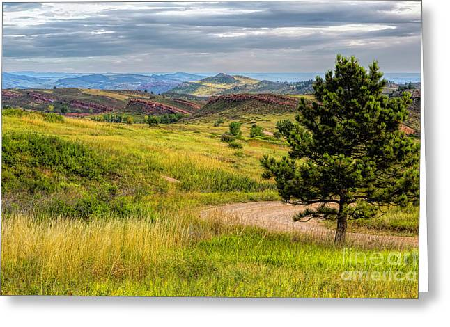A Tree Among The Hogs Greeting Card by Jon Burch Photography