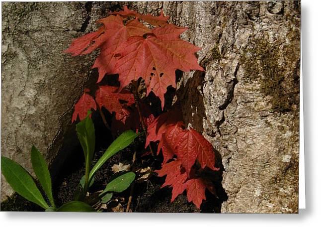 A Tree Hug Greeting Card by Donica Abbinett