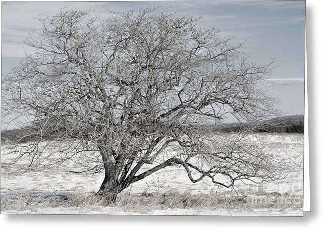 High Virginia Images Greeting Cards - A Tree In Canaan Greeting Card by Randy Bodkins
