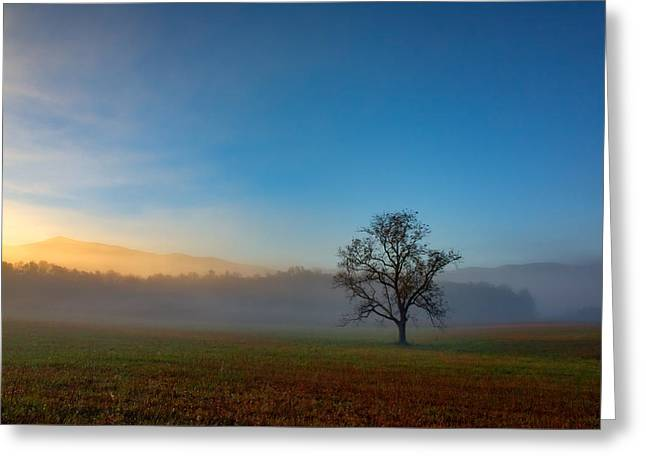 A Tree In The Mist In Cades Cove Greeting Card by Rick Berk