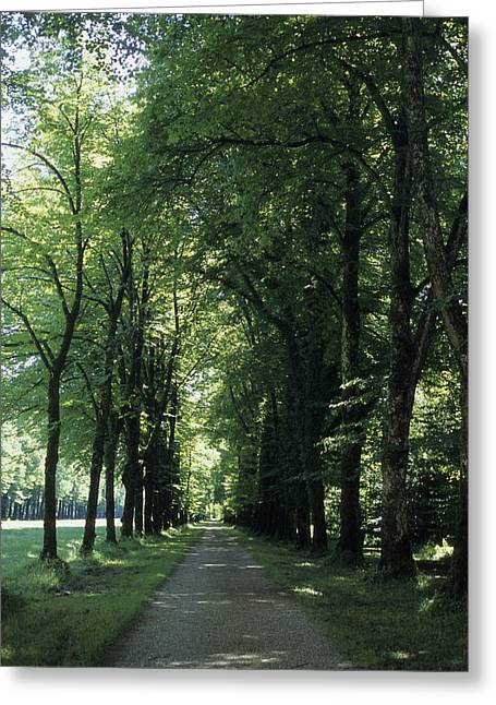 Eu Greeting Cards - A Tree Lined Path Leads To Mad King Greeting Card by Taylor S. Kennedy