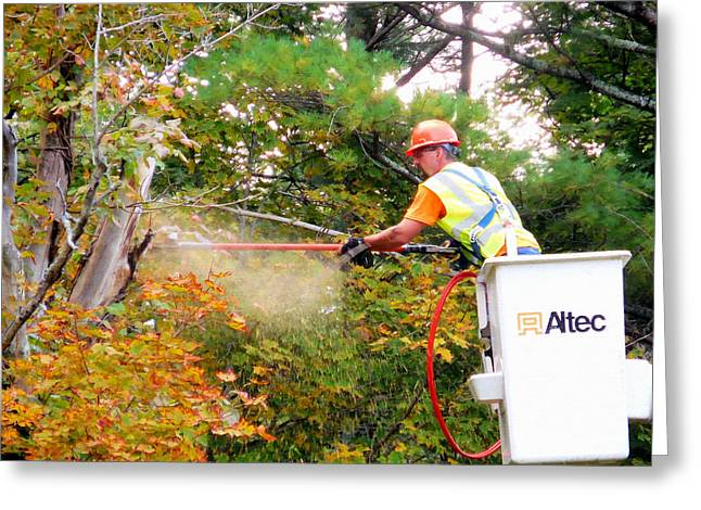 Saw Greeting Cards - A tree surgeon cuts and trims a tree 1 Greeting Card by Lanjee Chee