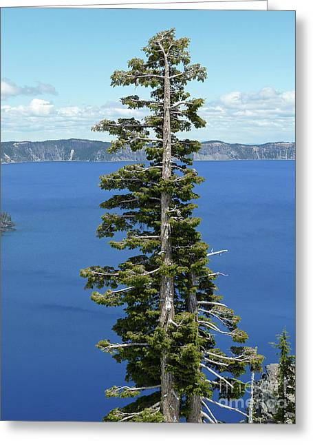 Crater Lake View Greeting Cards - A Tree With A View Greeting Card by Methune Hively