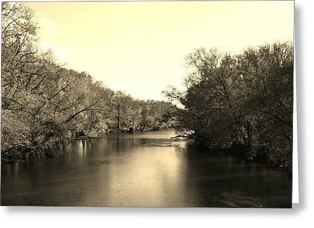 A Trees Thirst For Water - Sepia Greeting Card by Scott D Van Osdol
