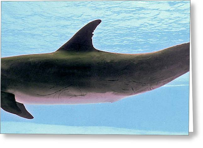Underwater Photos Greeting Cards - A Very Friendly Fellow Greeting Card by Methune Hively