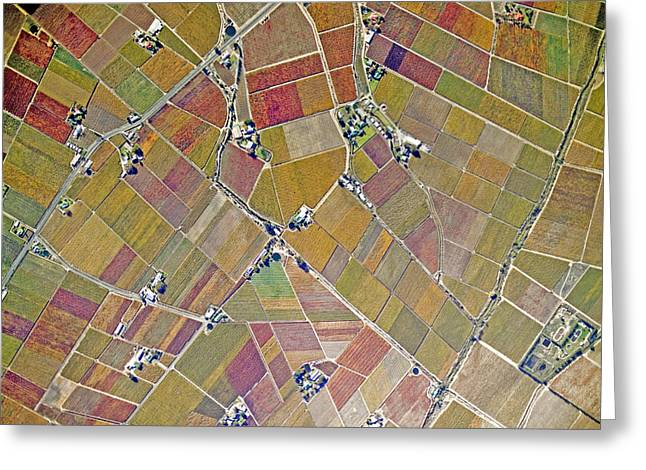 Cape Town Greeting Cards - A Very Large Vineyard Area To The East Greeting Card by Michael Fay