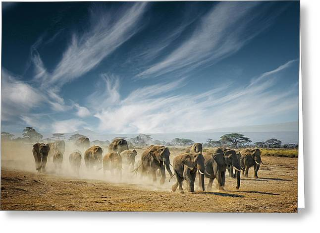Elephants Greeting Cards - A Very Long Thinking Greeting Card by Mathilde Guillemot