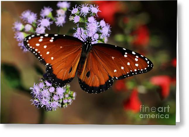 Queen Butterfly Greeting Cards - A Visit from the Queen Greeting Card by Sabrina L Ryan