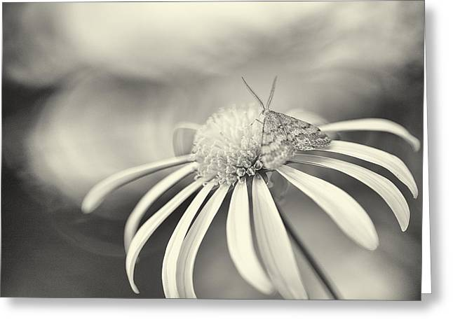 Harding Greeting Cards - A Visiting Moth Greeting Card by Constance Fein Harding