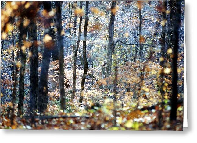 A Walk In Fall Greeting Card by Kay Sawyer