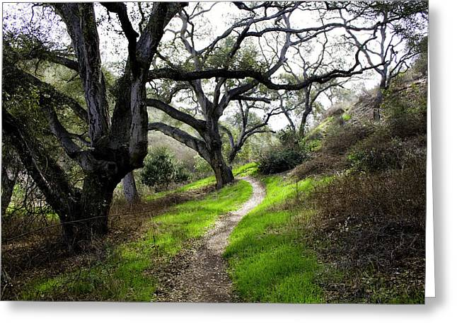 A Walk In The Woods Greeting Card by Joe Darin