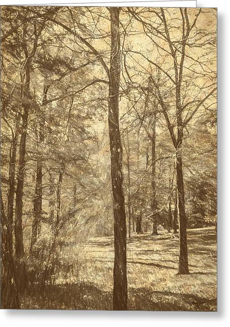 Warm Tones Greeting Cards - A Walk In The Woods - Woodland Landscape Greeting Card by Barry Jones