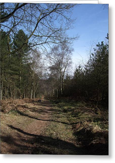 Cannock Chase Greeting Cards - A Walk On Cannock Chase Greeting Card by Jean Walker