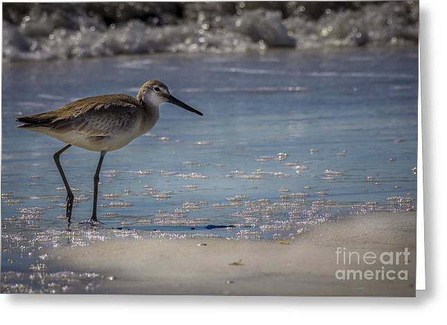Sea Bird Greeting Cards - A Walk On The Beach Greeting Card by Marvin Spates