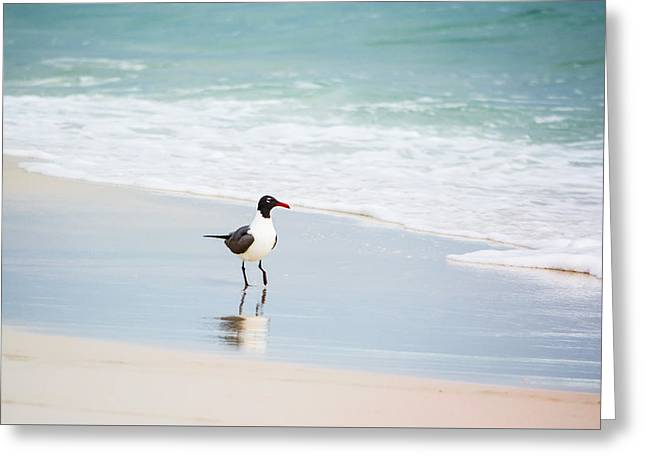 A Walk On The Beach Greeting Card by Shelby  Young