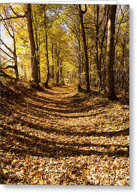 A Walk On The Old Trace - Natchez Trace Greeting Card by Debra Martz
