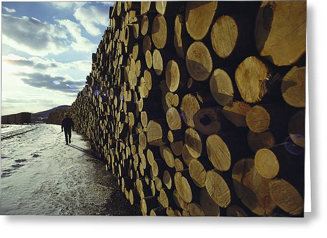 Forests And Forestry Greeting Cards - A Wall Of Newly Delivered Spruce Greeting Card by Ira Block