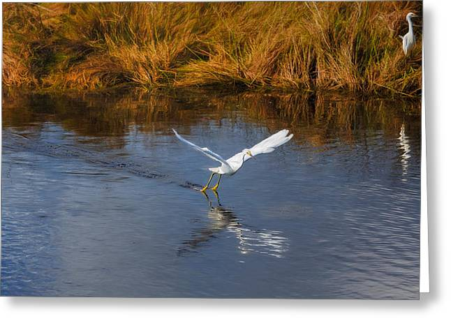 Wildlife Refuge. Greeting Cards - A Water Ballet Greeting Card by John Bailey