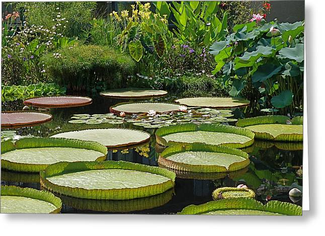 A Water Garden Greeting Card by Byron Varvarigos