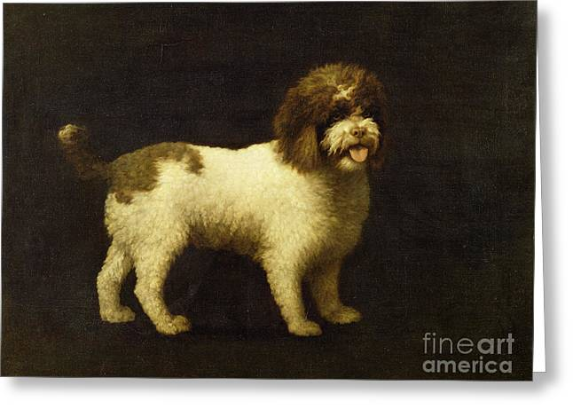 Doggy Greeting Cards - A Water Spaniel Greeting Card by George Stubbs