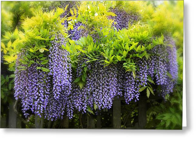 Wisteria Greeting Cards - A wealth of Wisteria Greeting Card by Jessica Jenney