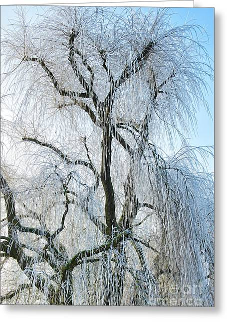 A Weeping Winter Willow  Greeting Card by Tim Gainey