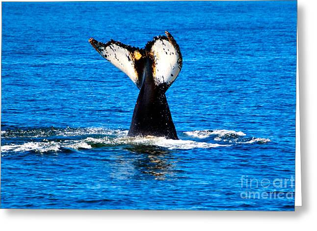 Save The Whales Greeting Cards - Never Say Goodbye Greeting Card by Led Zeppalan Photography