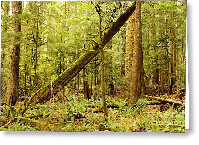 Moss Green Greeting Cards - A Whisper in the Rainforest Greeting Card by Carol Groenen