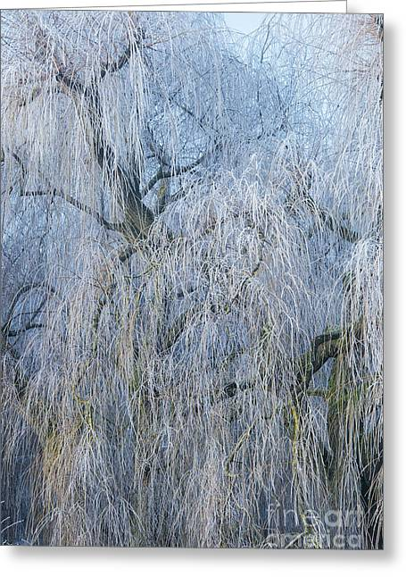 A Winter Willow Weeps Greeting Card by Tim Gainey
