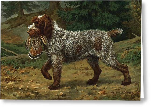 Illustration Greeting Cards - A Wire-haired Pointing Griffon Holds Greeting Card by Walter A. Weber