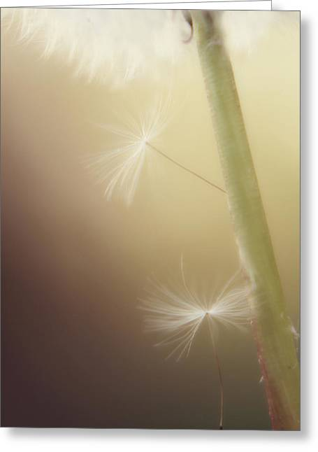 Flower Picture Greeting Cards - A Wish and a Prayer Greeting Card by Amy Tyler