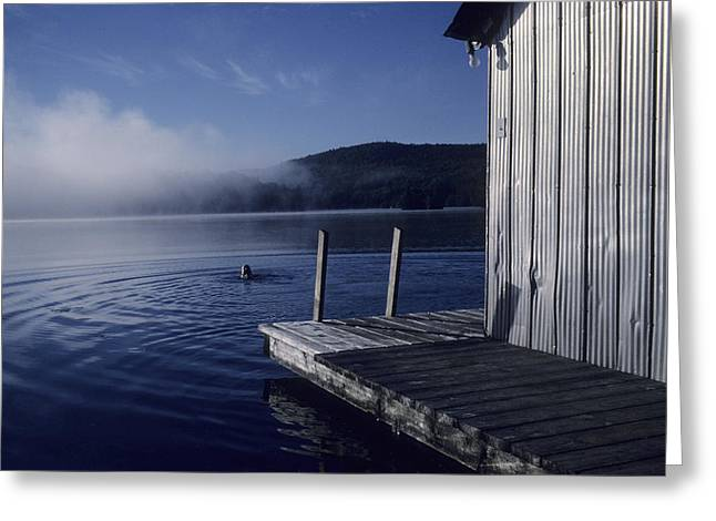 Swim Ladder Greeting Cards - A Woman Swims In A Lake On An Early Greeting Card by Taylor S. Kennedy