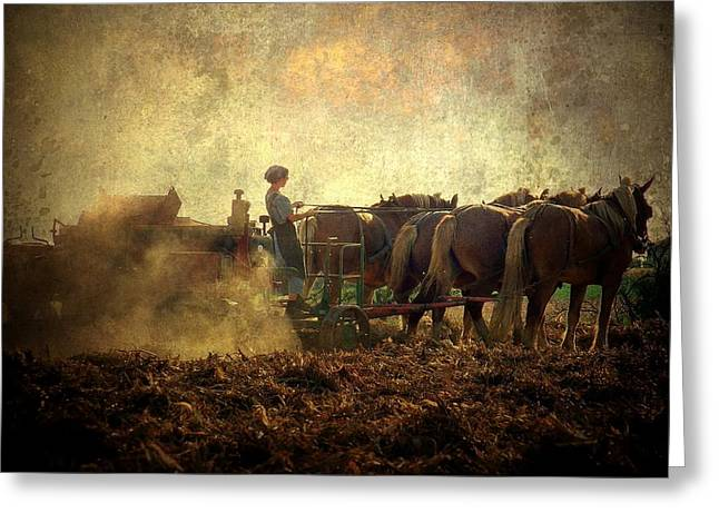 Amish Farm Greeting Cards - A Womans Work Is Never Done Greeting Card by Trish Tritz