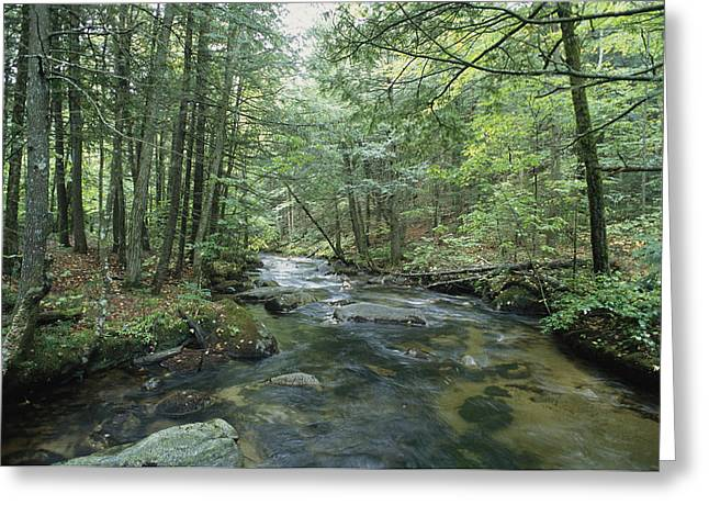 A Woodland View With A Rushing Brook Greeting Card by Heather Perry