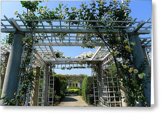 Trellis Greeting Cards - A World Of Roses Greeting Card by Denise Mazzocco