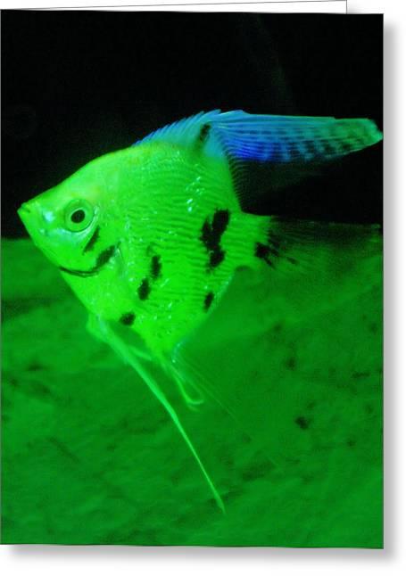 Aquarium Fish Greeting Cards - A Yellow Fish  Greeting Card by Jeff  Swan