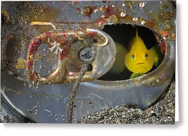 Honshu Greeting Cards - A Yellow Goby Peers Through The Window Greeting Card by Brian J. Skerry