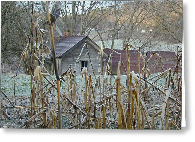 Cornfield Greeting Cards - Abandoned Farmhouse and Cornfield Greeting Card by Douglas Barnett