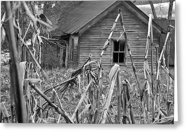Cornfield Greeting Cards - Abandoned Farmhouse through Cornfield Greeting Card by Douglas Barnett